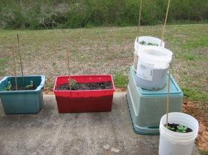 container garden, container gardening, kitchen garden