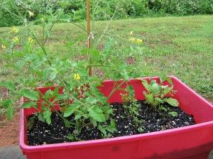 vegetable, container garden