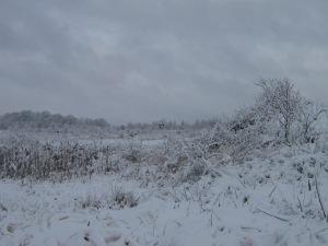 Snowy Landscape2