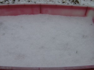 Snow in the vegetable container
