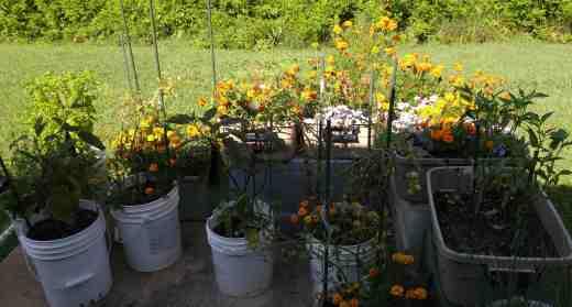 july16 garden